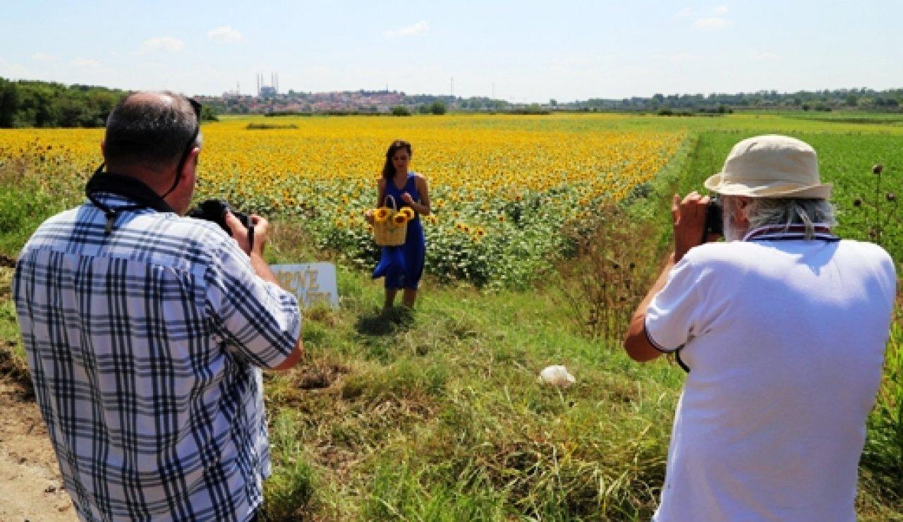 edirne foto safari ayçiçek ile ilgili görsel sonucu